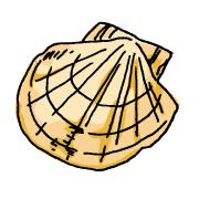 帆立貝(ホタテ)